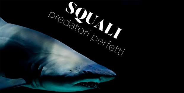 Squali. Predatori perfetti