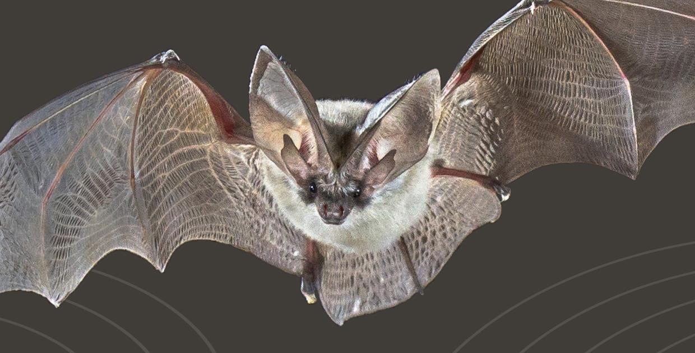 Ali nella notte. I pipistrelli tra scienza e immaginario