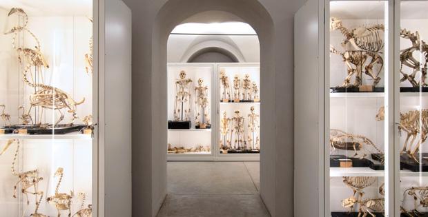 Kosmos inaugura i depositi del museo