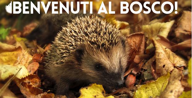 Benvenuti al Bosco